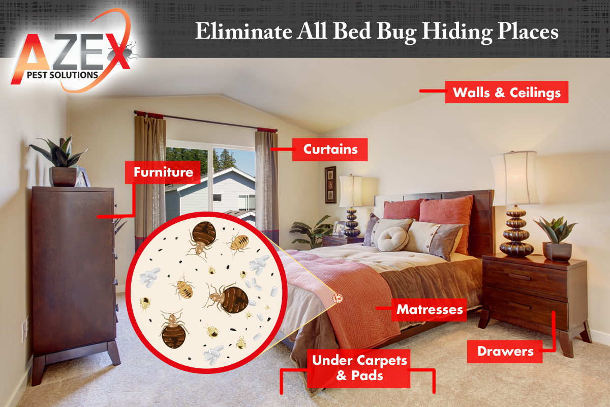 Azex Home Bed Bug Diagram