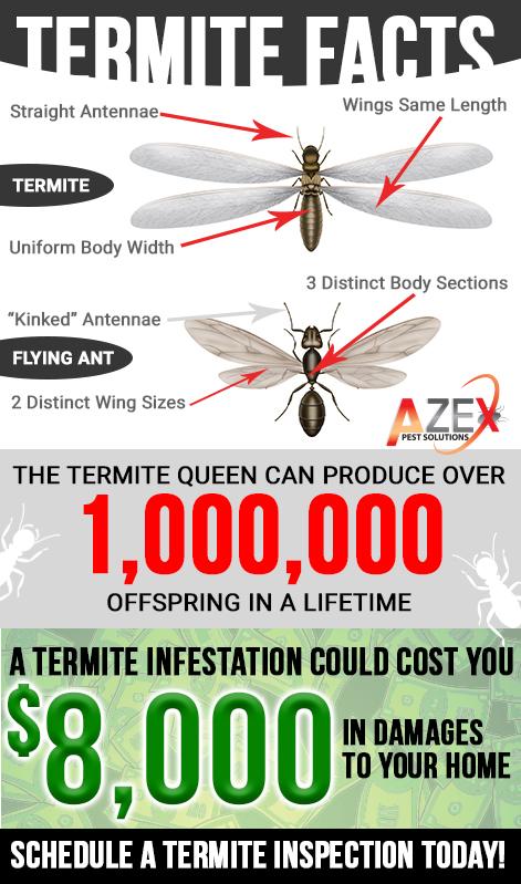 Termite Facts | AZEX Pest Arizona