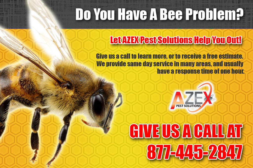 Bee removal services azex pest solutions bed bug heat and have a bee problem get same day service with azex solutioingenieria Images