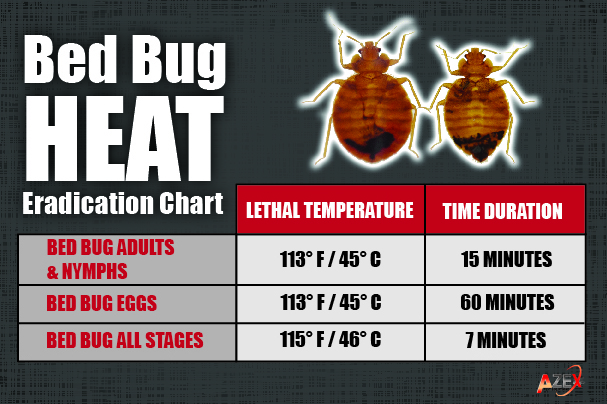 Bed Bug Pictures Azex Pest Solutions Pest Bed Bug