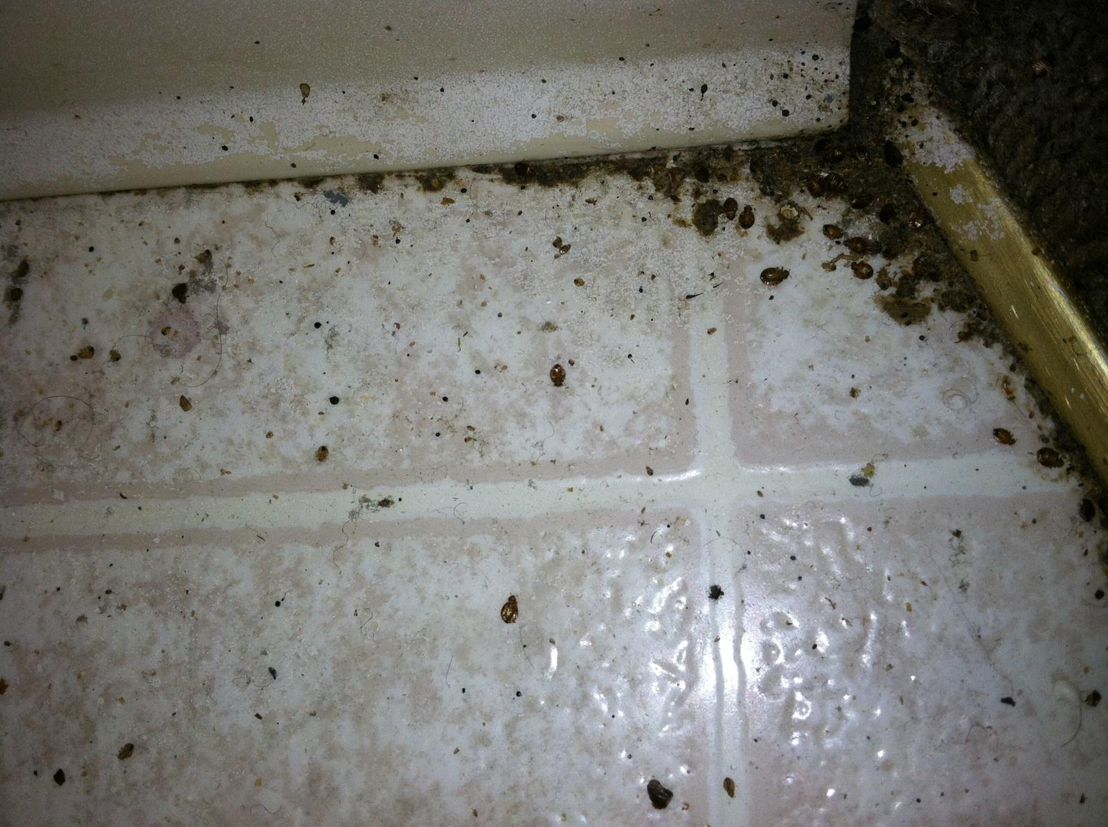 Bed Bug Pictures Azex Pest Solutions Bed Bug Heat And