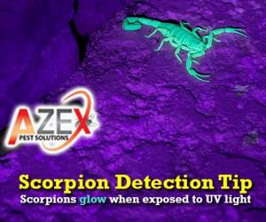 Scorpion Detection | AZEX Pest Solutions