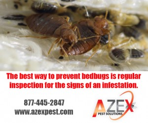 Bed Bug Infest | AZEX Pest Solutions