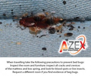 Bed Bug Facts | AZEX Pest Solutions
