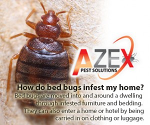 Bed Bug Infestations | AZEX Pest Solutions