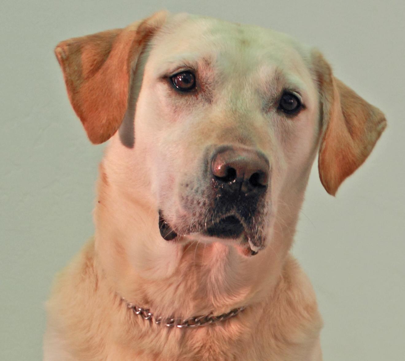 K-9 detection dog