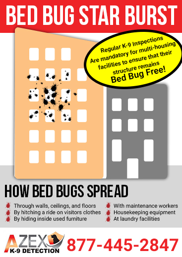 How To Prevent Bed Bugs From Spreading In An Apartment