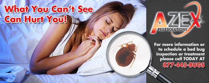 Bed Bugs Can Hurt you