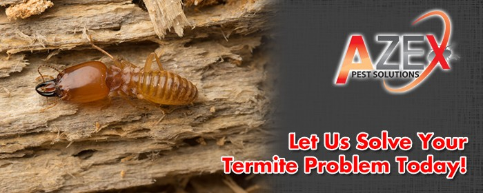 Azex Pest Solutions Arizona Bed Bug And Termite