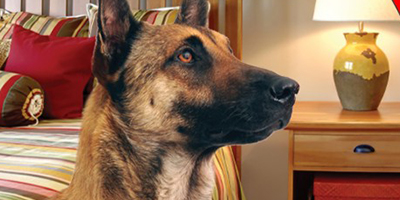 K-9 blog feature image