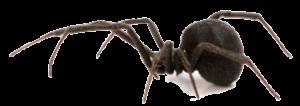 blackwidow-header