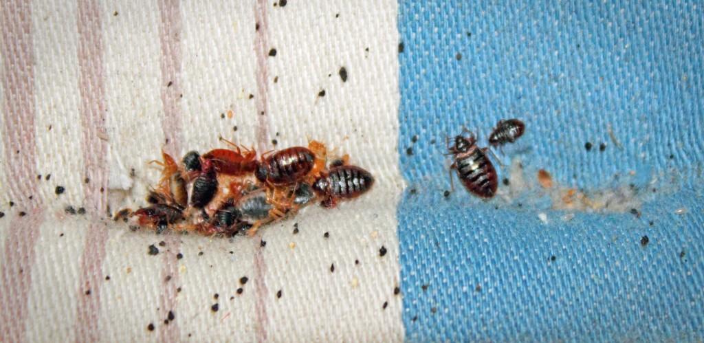 bbugs1
