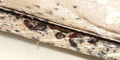 Don't Let the Bed Bugs Bite…