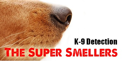 K-9 Detection – The Super Smellers