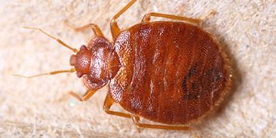 Bed Bug Awareness Week – June 7th- 13th