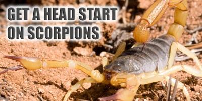 Get A Head Start On Scorpions