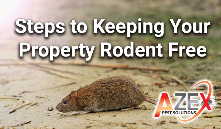 Steps to Keeping Your Property Rodent Free