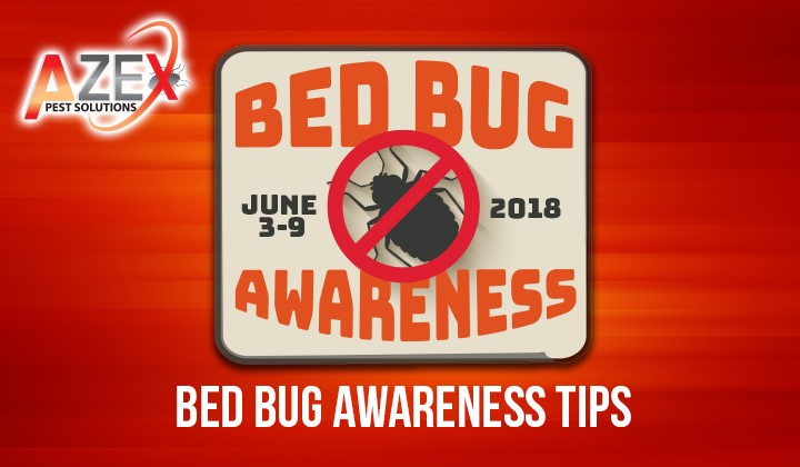 Before Your Summer Vacation – Bed Bug Awareness Tips