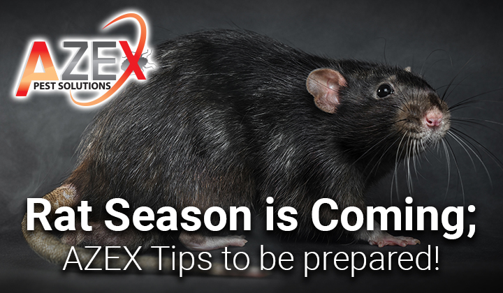 Rat Season is Coming; AZEX Tips to be prepared!