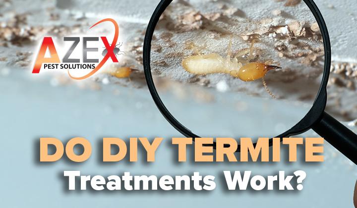Do DIY Termite Treatments Work?