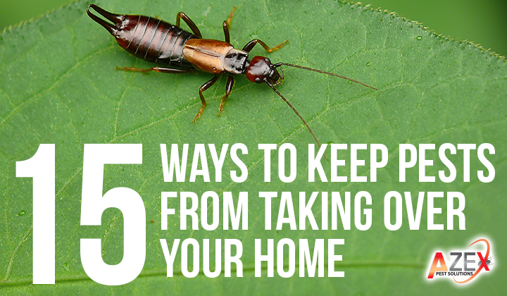 15 Ways To Keep Pests From Taking Over Your Home