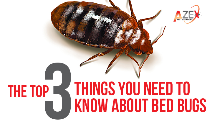 The Top 3 Things You Need To Know About Bed Bugs