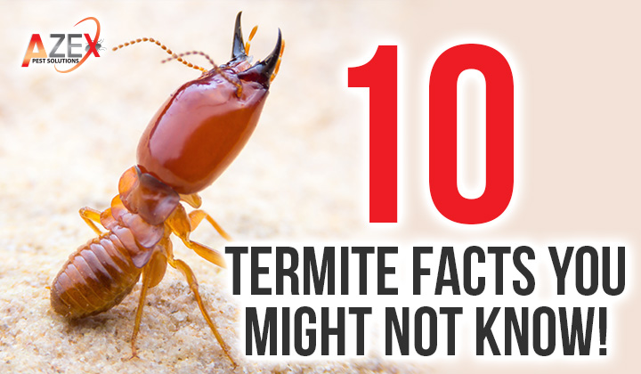 10 Termite Facts You Might Not Know