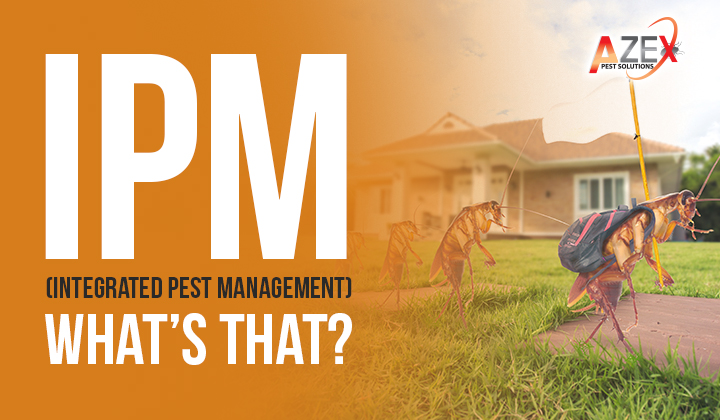 IPM (Integrated Pest Management) – What's That?