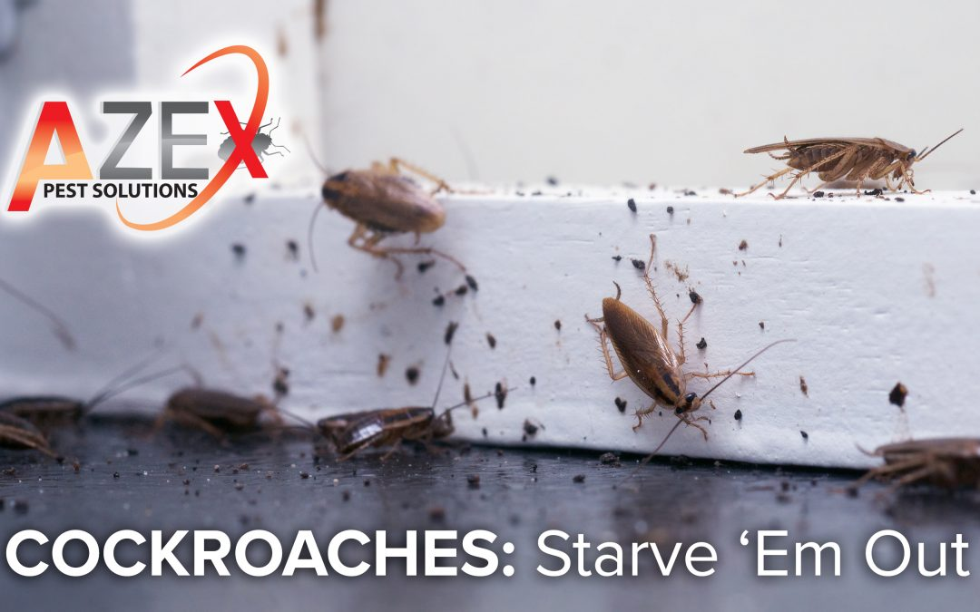 Cockroaches: Starve 'Em Out
