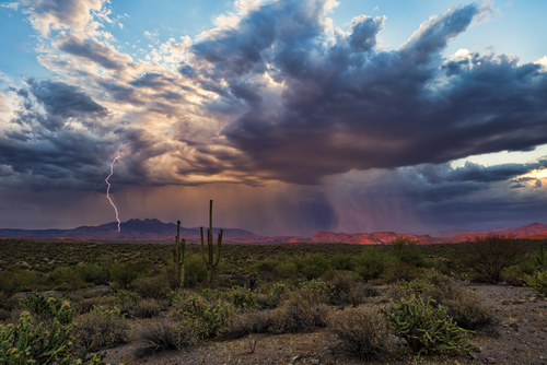 Arizona Summer and Monsoon Season: How Weather Affects Insect Problems
