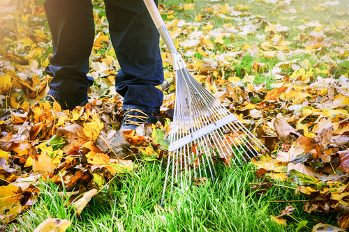 Top 10 Pest-Proofing Tips for Fall:  Be Bug Free All Year!